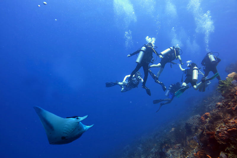 Dive shop lombok sudamala resorts - Lombok dive resort ...